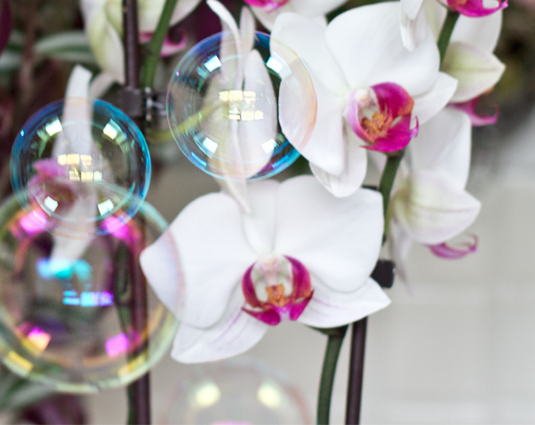 Orchideen met zeepbellen